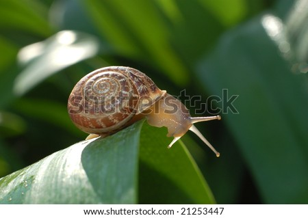 Snail in a grass