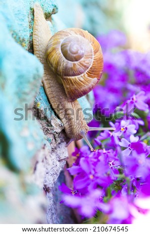 Snail in flowers - stock photo