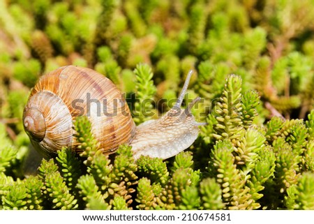 Snail in small succulents - stock photo