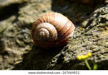 snail in the stone - stock photo