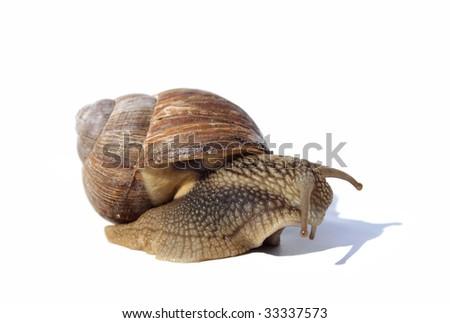snail looking sad and depressive - stock photo