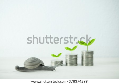 snail low speed and growing plant on row of coin money for value investment concept - stock photo