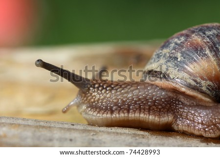 Snail moving in a Garden - stock photo