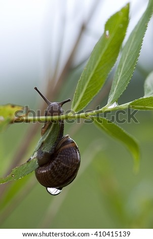 Snail on a green branch - stock photo