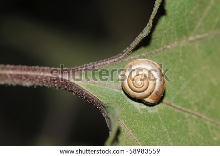 snail on a leaf - stock photo