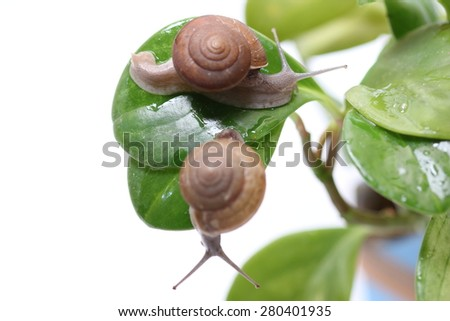 Snail on a leaf green - stock photo