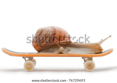 Snail on a skateboard on the white background - stock photo