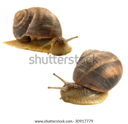 Snail on a write background