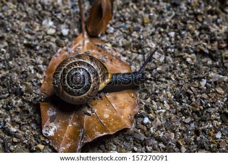 Snail on an Autumn Background. Closeup - stock photo
