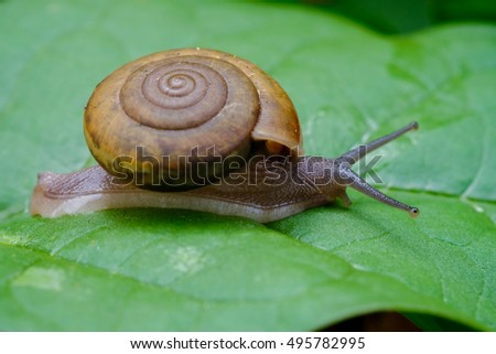 snail on green leaf.
