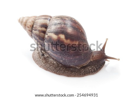snail on isolate background - stock photo