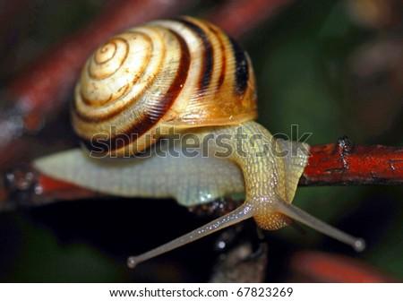 Snail on plant - stock photo