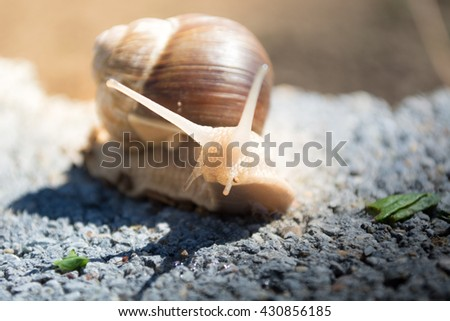 Snail on the dirt in search for food. Sunny day