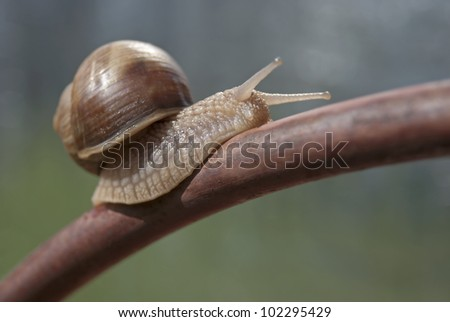 Snail on the iron bar