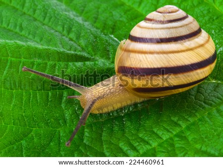 Snail on the leaf - stock photo