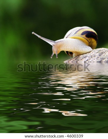 snail on the stone above the water - stock photo