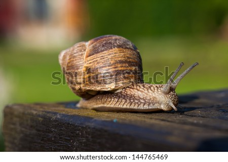 snail on the table - stock photo