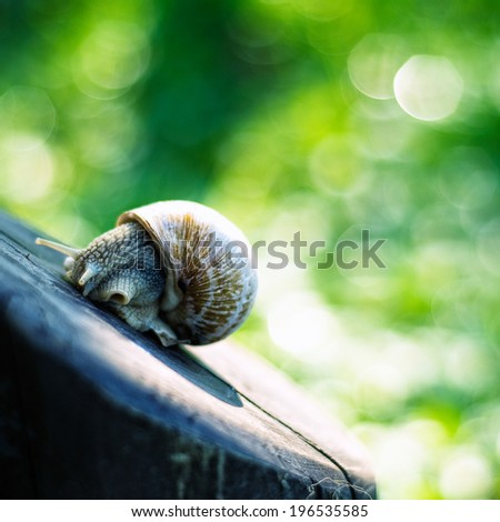 snail on the table, beautiful bokeh