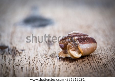 Snail on the wood table .
