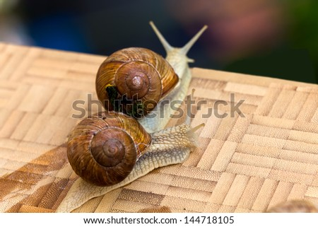 Snail on the wooden background