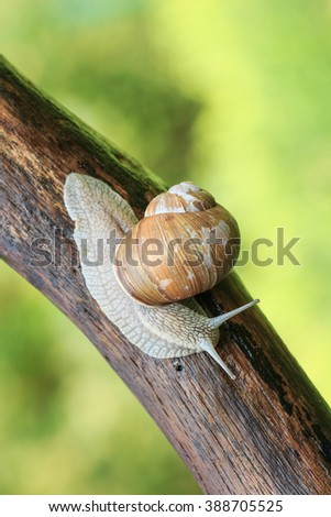 Snail on tree branch - stock photo