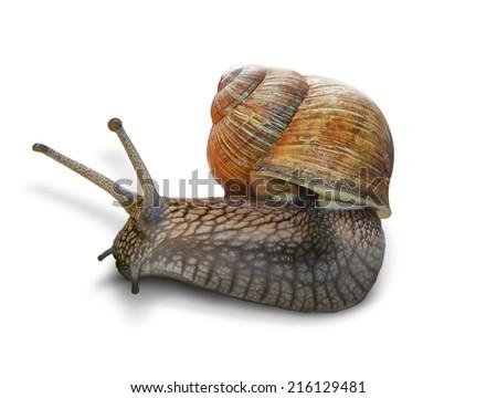 snail on white background. - stock photo