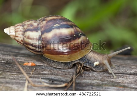snail or escargot