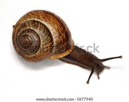 Snail ordinary - stock photo