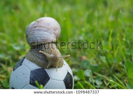 stock-photo-snail-playing-soccer-and-rol