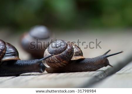 Snail race - stock photo
