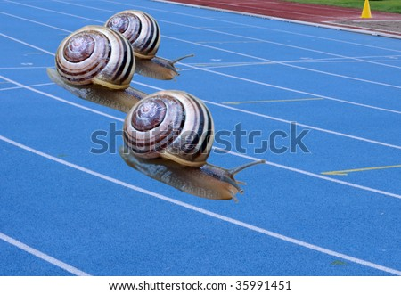 Snail race - stock photo