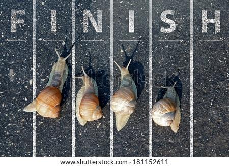 Snail run near the Finish line - stock photo