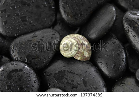 snail shell and wet stones