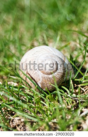 Snail shell in the grass. - stock photo