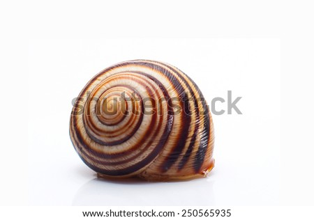 snail shell isolated on white background - stock photo