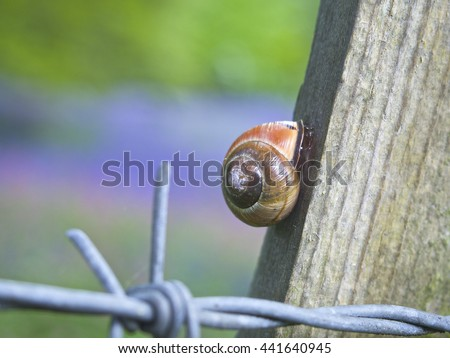 Snail shell on a post with barbed wire, bluebell background