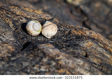 Snail Shell on Rock in Bright Sun - stock photo