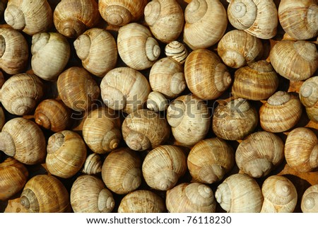 Snail shells - stock photo