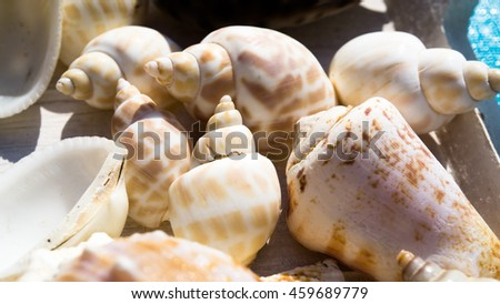 snail shells and seashells