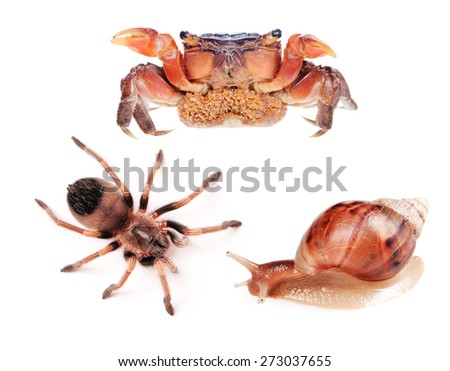 Snail, spider and crab isolated on white background.