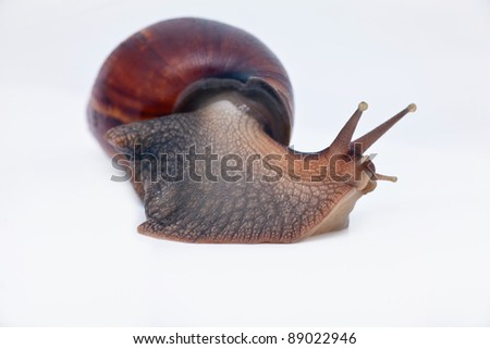 snail turn left on the way