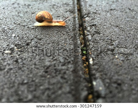 Snail waiting and thinking before attempting to cross  over a gap in the paving  - stock photo