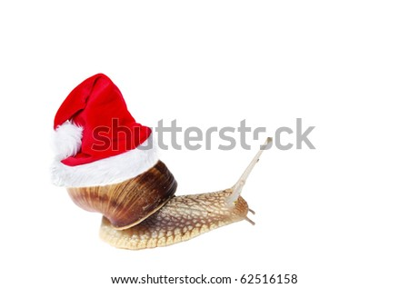 Snail with santa`s hat