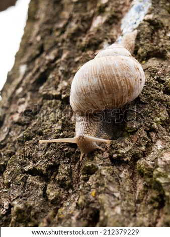 Snail with slime - stock photo