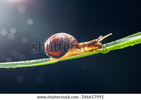 snail with water particles bokeh as the background - stock photo