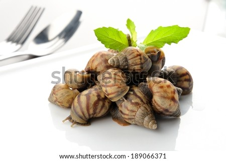 snails be alive on white plate, fake food - stock photo