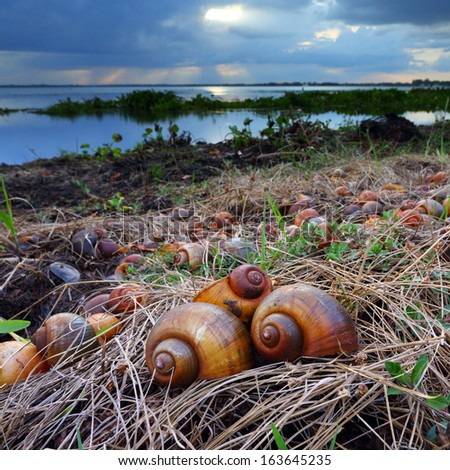 Snails died on the lake - stock photo