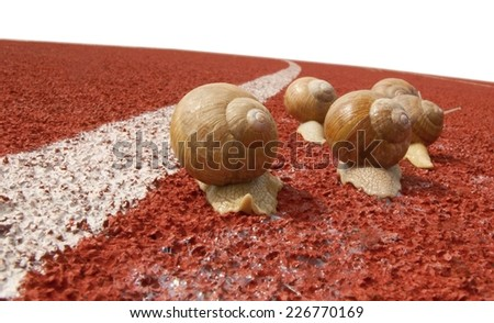 Snails on a real red running race track with white dividing line, leaving a visible trail of slime  - stock photo
