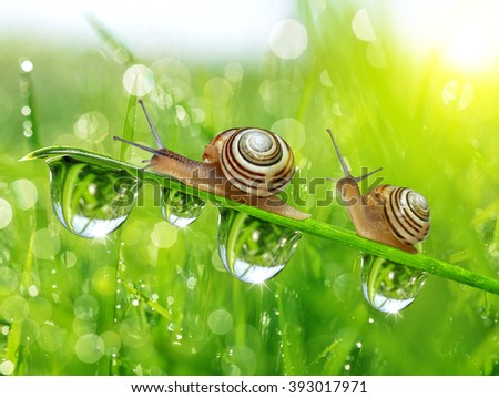 Snails on dewy grass close up - stock photo
