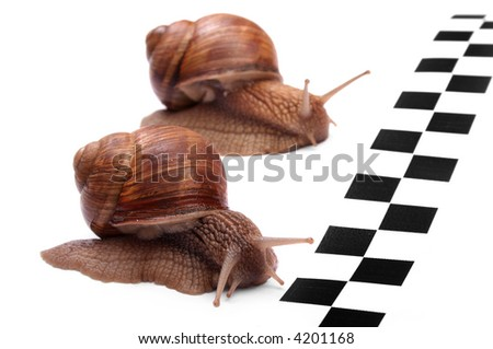 Snails racing - stock photo